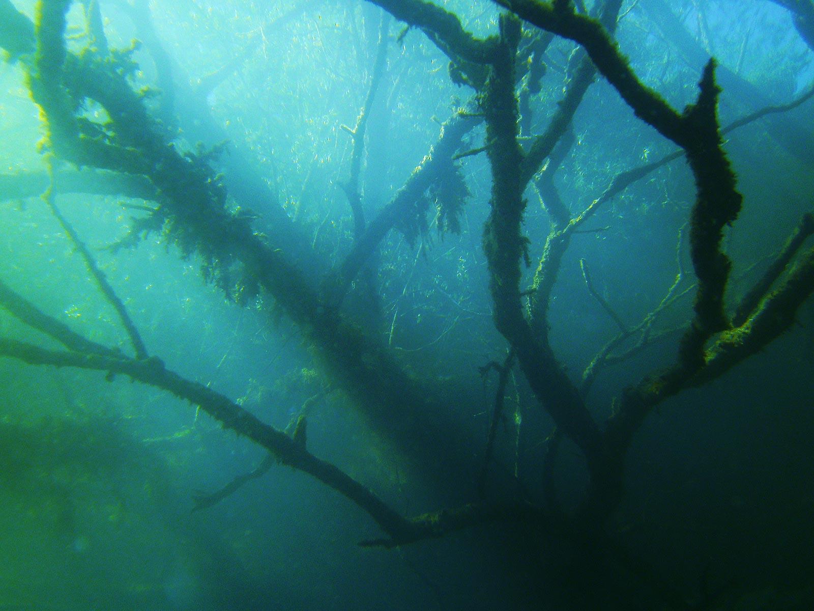 Geschützt: Hemmoor 2012